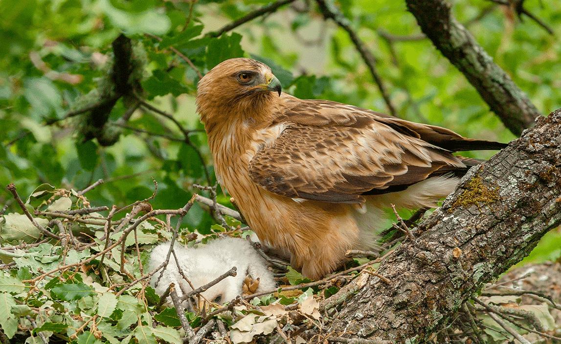 Ave Aguila Calzada Viaje Hacia el Calor