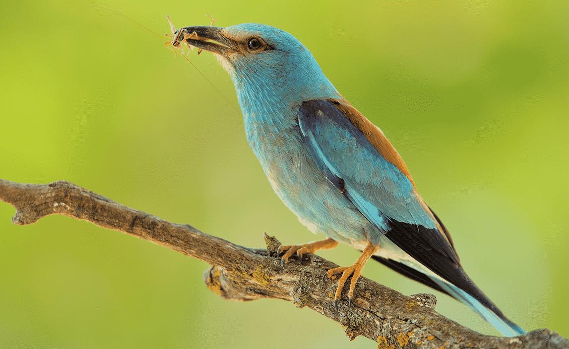 Aves Viaje Hacia el Calor